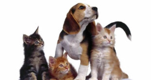Perro rodeado de gatos